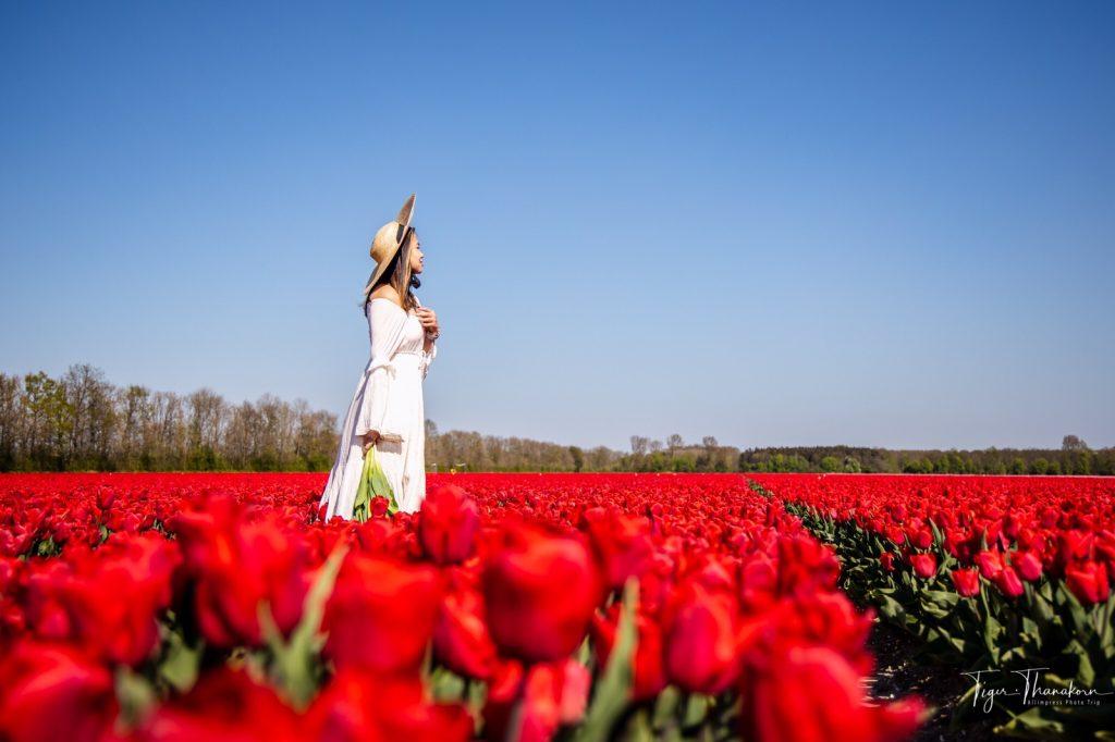 23 tulip2