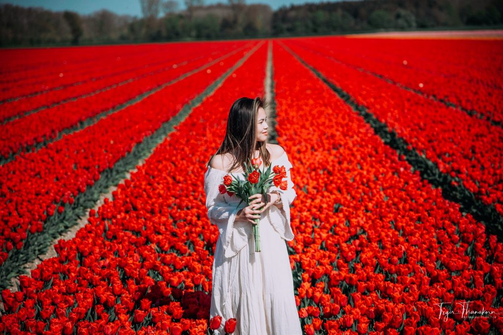 tulip1